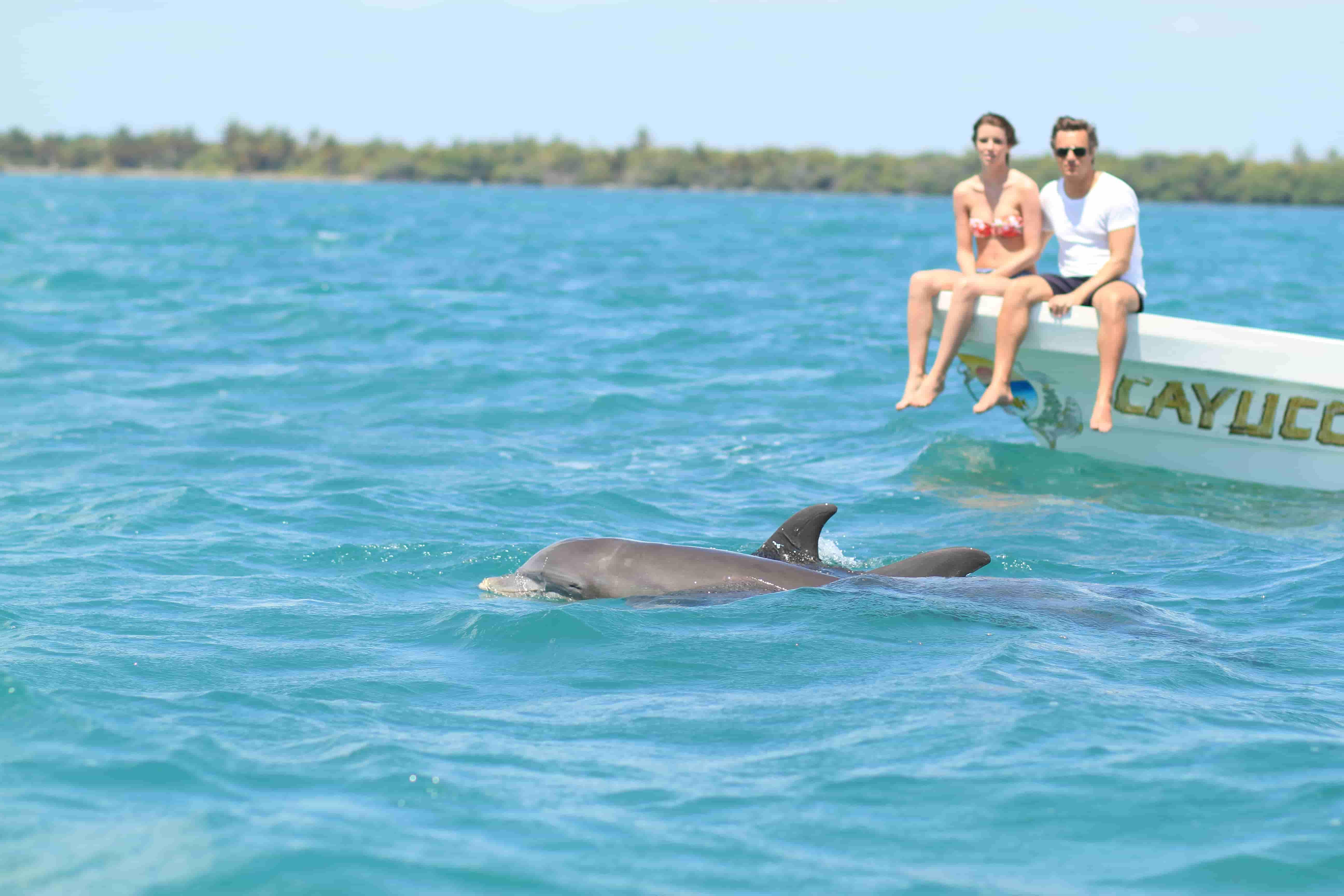 dauphins sian kaan punta allen