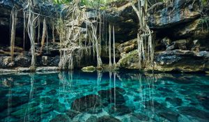 cenote mexique racine