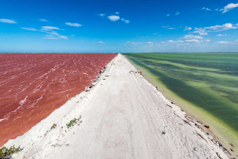 coloradas rio lagartos