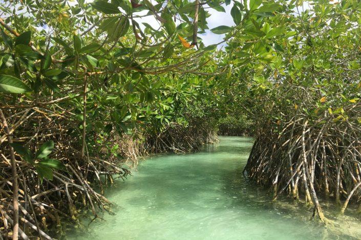 Mangrove de la réserve de Sian Ka'an Muyil
