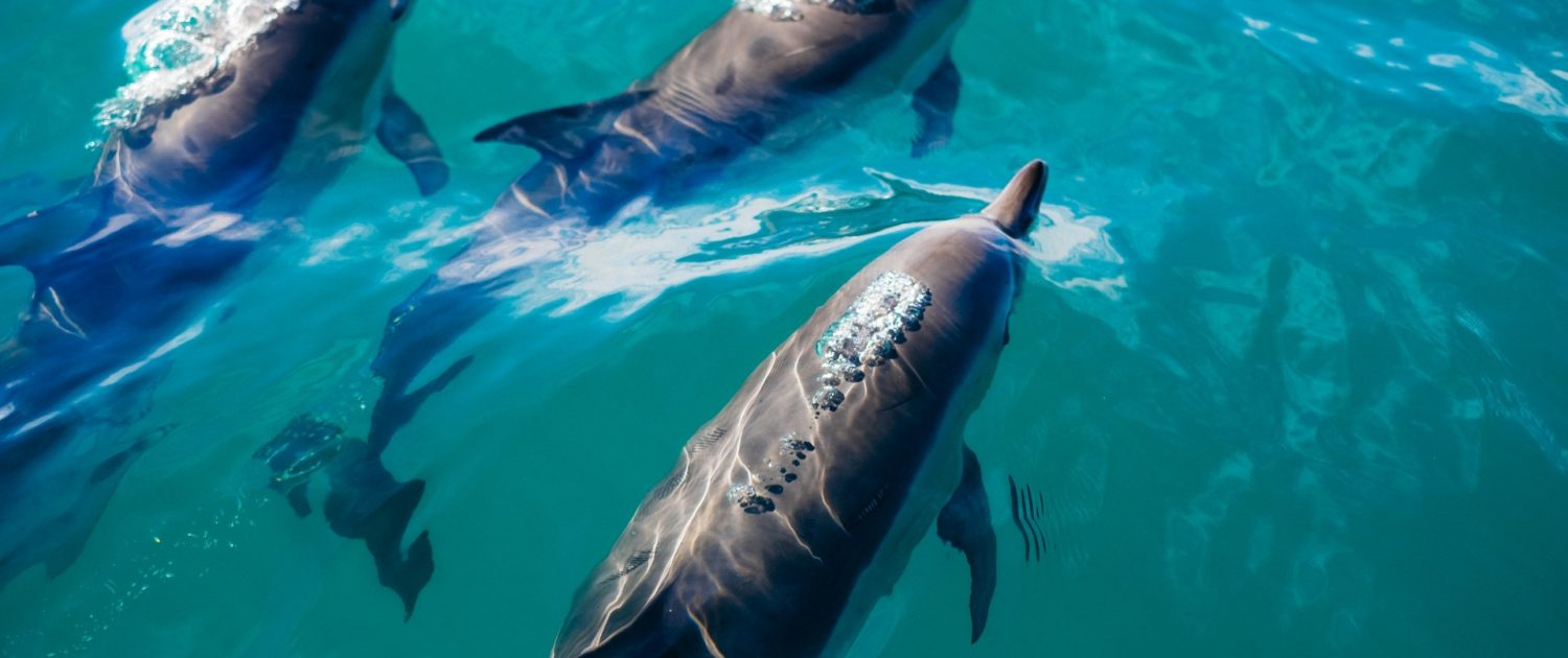 dauphins excursion holbox