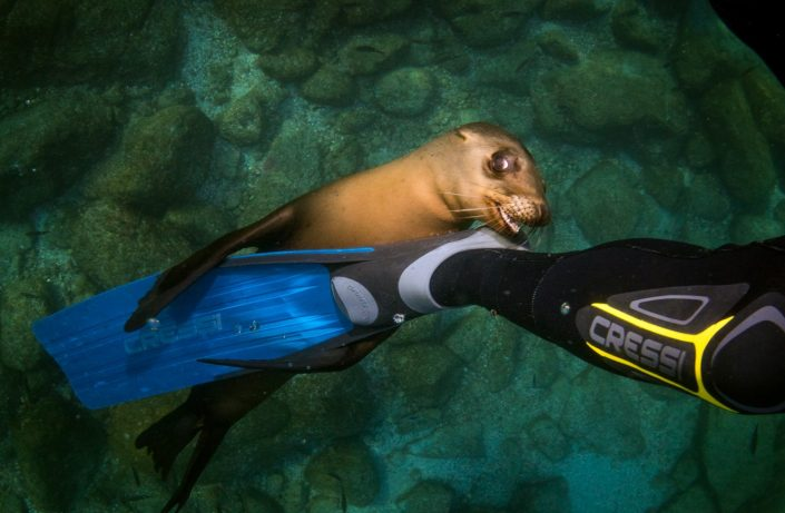 Snorkeling avec les otaries à Isla Espíritu Santo