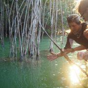 mangroves yucatan rio lagartos