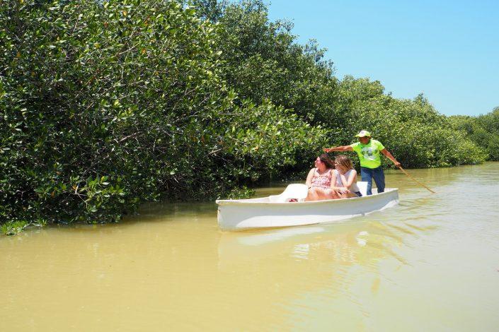 Mangrove de Celestun