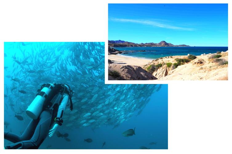 Plongée au Mexique et découverte des fonds marins de Cabo Pulmo en Basse-Californie