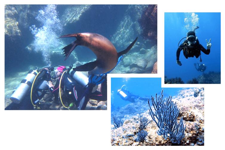 Plongée au Mexique avec les otaries et lions de mer