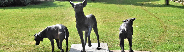 Les chiens xoloitzcuintle mexicains pour el Día de los muertos